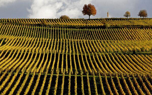 Un paesaggio autunnale in Germania. - Sputnik Italia