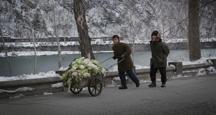 Un ragazzino spinge un carrello con dei cavoli lungo la strada principale di Hyangsan, villaggio a nord di Pyongyang.