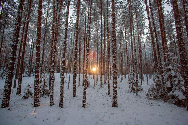 Le vacanze invernali in Carelia. - Sputnik Italia