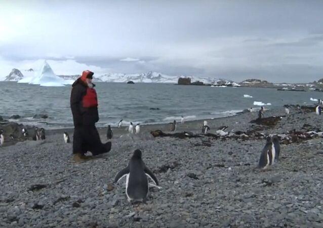 Patriarca Kirill visita i pinguini nell'Antartide