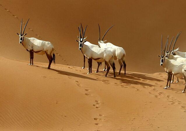Il confine tra Oman e Arabia Saudita