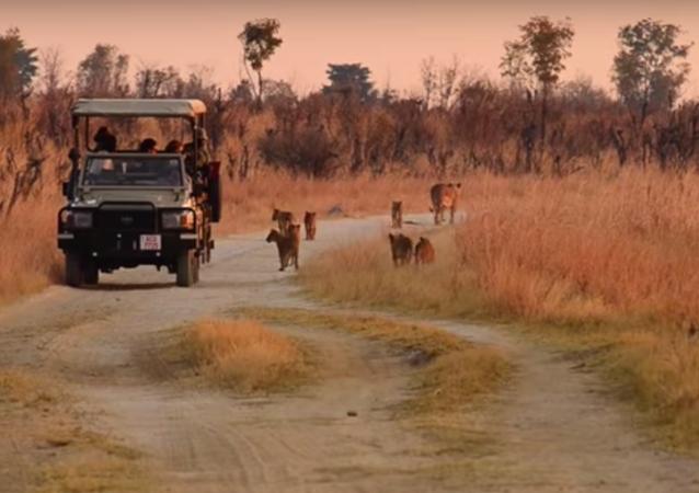 Una riserva in Zimbabwe