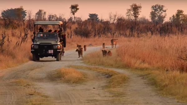 Una riserva in Zimbabwe - Sputnik Italia