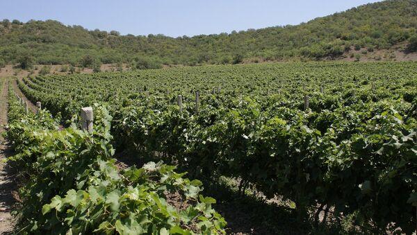 Vineyards in Crimea - Sputnik Italia