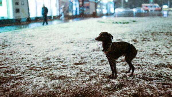 Un cane gioca nella neve - Sputnik Italia