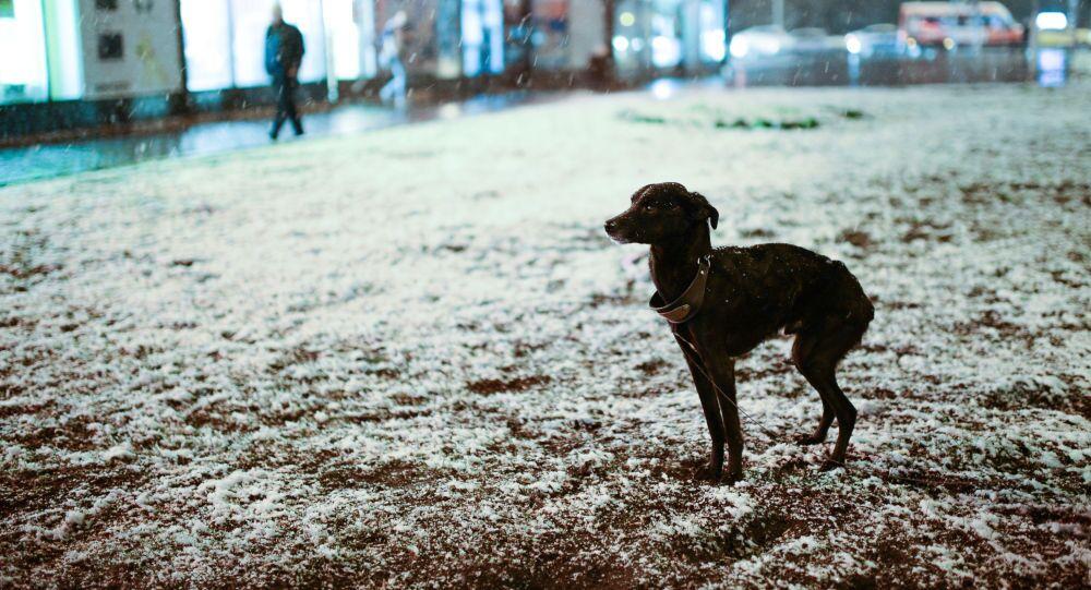 Un cane gioca nella neve