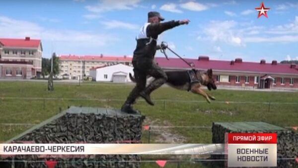 Allenamento dei cinofili dell'esercito russo - Sputnik Italia