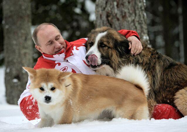 Vladímir Putin,