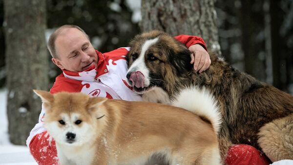 Vladímir Putin, - Sputnik Italia