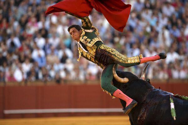 Il matador David Galvan incornato da un toro a Siviglia. - Sputnik Italia