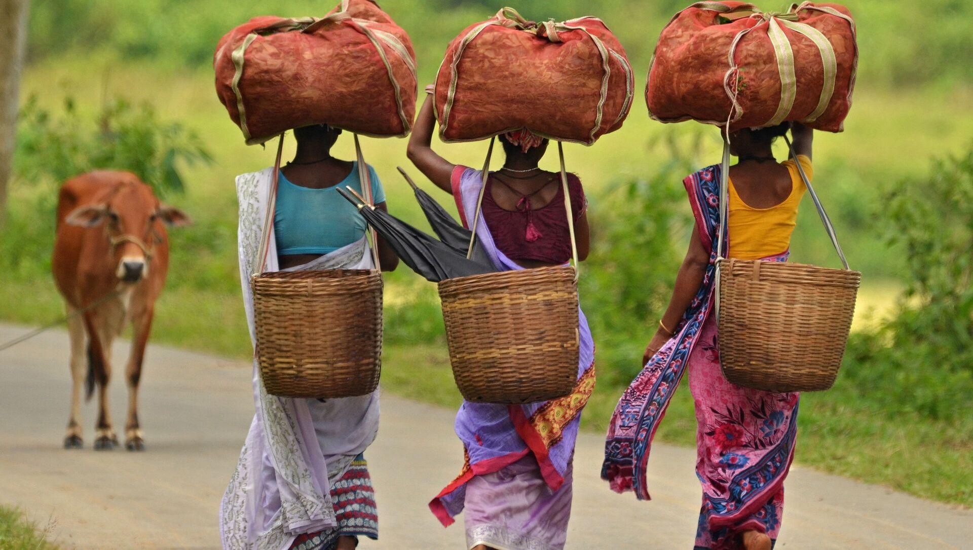 Delle ragazze indiane portano sacchetti di foglie di tè in una piantagione di tè nello stato dell'Assam, India - Sputnik Italia, 1920, 28.04.2021