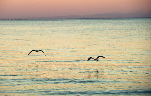I gabbiani sul mar Nero nella città Eupatoria. - Sputnik Italia