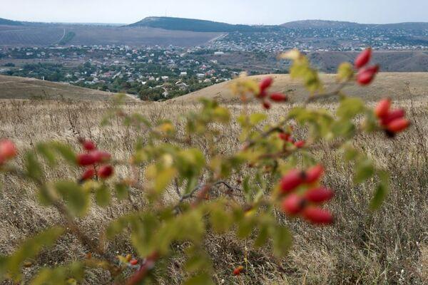 La rosa canina nei pressi del villaggio Klinovka, Crimea. - Sputnik Italia