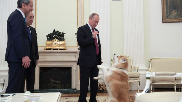 Putin e il cane Yume - Sputnik Italia