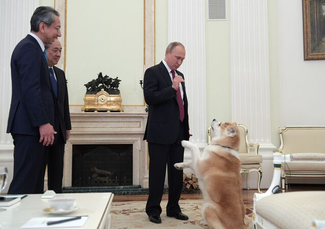 Putin e il cane Yume
