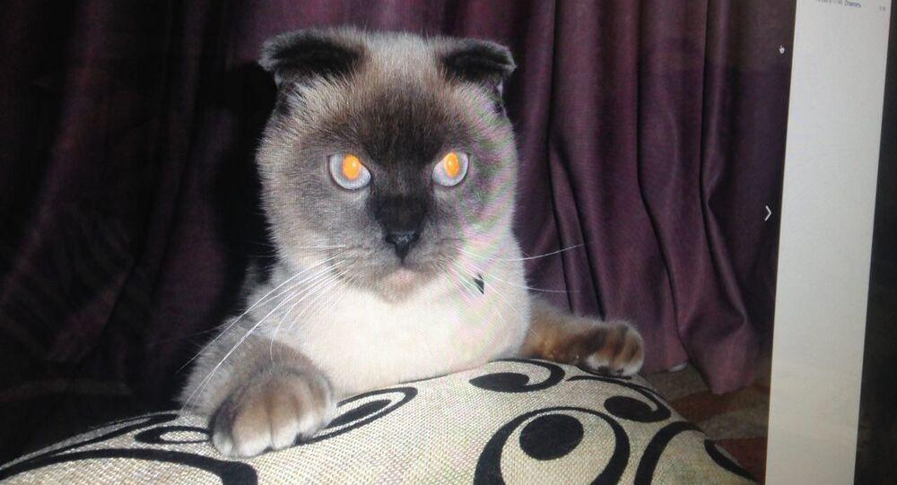 Il gatto Barsik