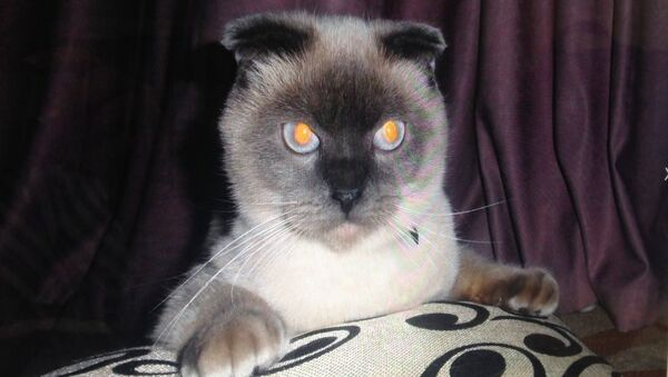 Il gatto Barsik - Sputnik Italia