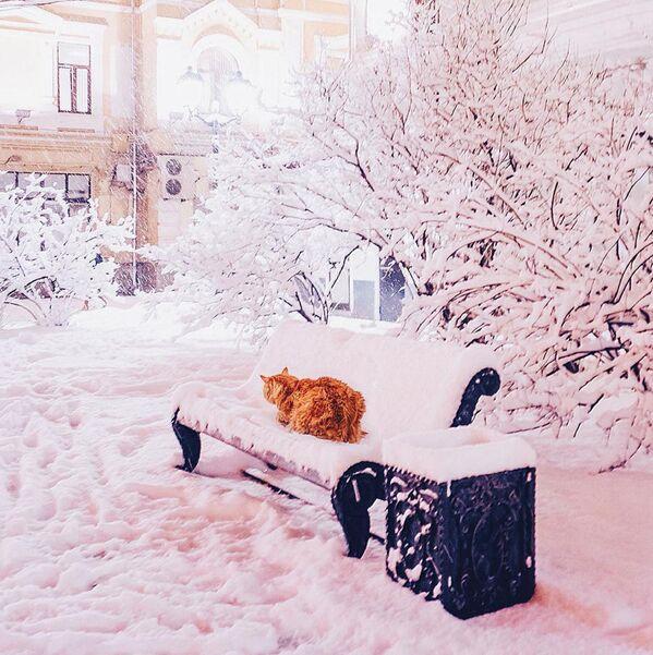 La gatta della fotografa. - Sputnik Italia
