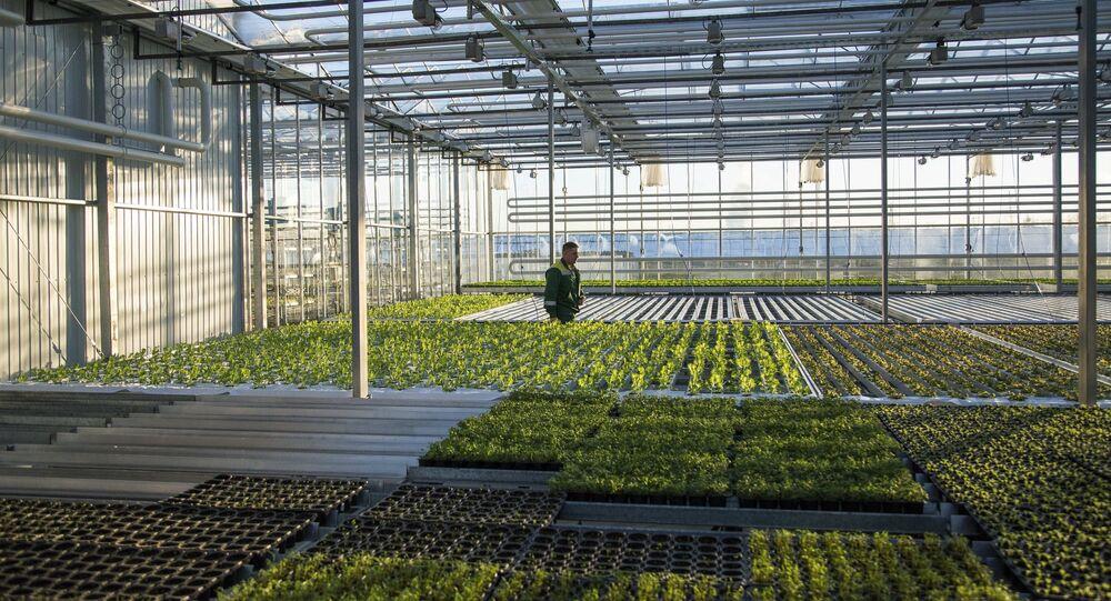 Greenhouse complex