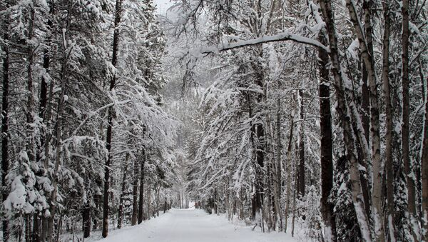 Una foresta d'inverno - Sputnik Italia