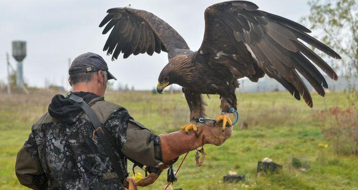 Un collaboratore della riserva Galichya Gora (La monte Galichya) con un aquila reale nella voliera per uccelli rapaci. La riserva si trova nella regione di Lipetsk.