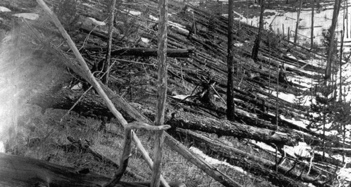 Alberi abbattuti nella zona epicentro dell'evento di Tunguska