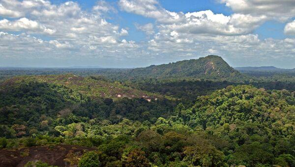 Una foresta del Congo - Sputnik Italia