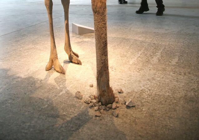 L'opera di Maurizio Cattelan, Struzzo