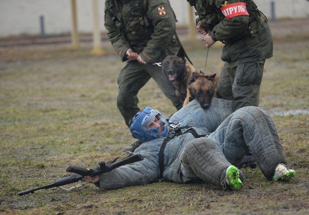 Come si allenano i Nuclei Cinofili della Guardia Nazionale.