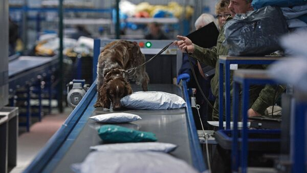A Russian customs service employee with a dog check parcels for narcotic drugs and potent substances at the Tolmachovo international postal exchange office. (File) - Sputnik Italia