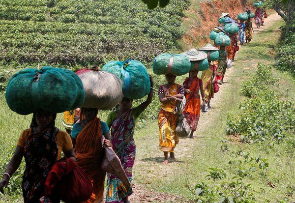 Lavoratori portano sacchi con foglie di tè in India. - Sputnik Italia