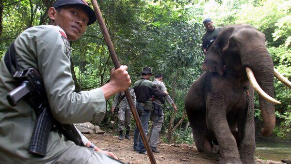 Слон на службе у индонезийской полиции  - Sputnik Italia