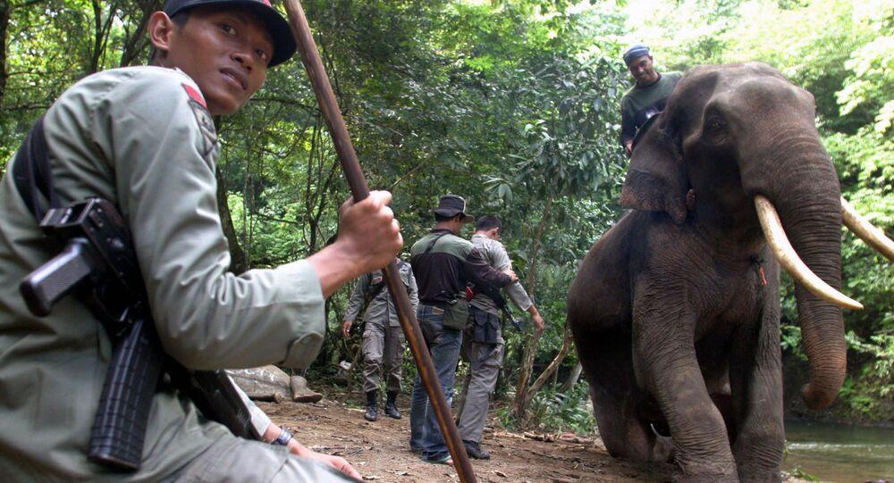 Elefante (foto d'archivio)