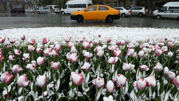Una nevicata a Novosibirsk (foto d'archivio) - Sputnik Italia