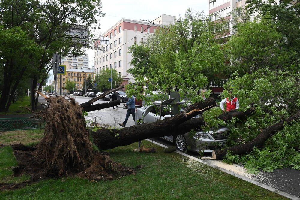 Un albero abbattuto dall'uragano a Mosca.