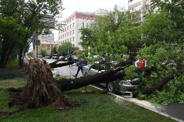 Un albero abbattuto dall'uragano a Mosca. - Sputnik Italia