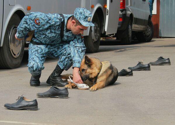 99 anni di fiuto vincente, la festa dei cani della Polizia russa - Sputnik Italia