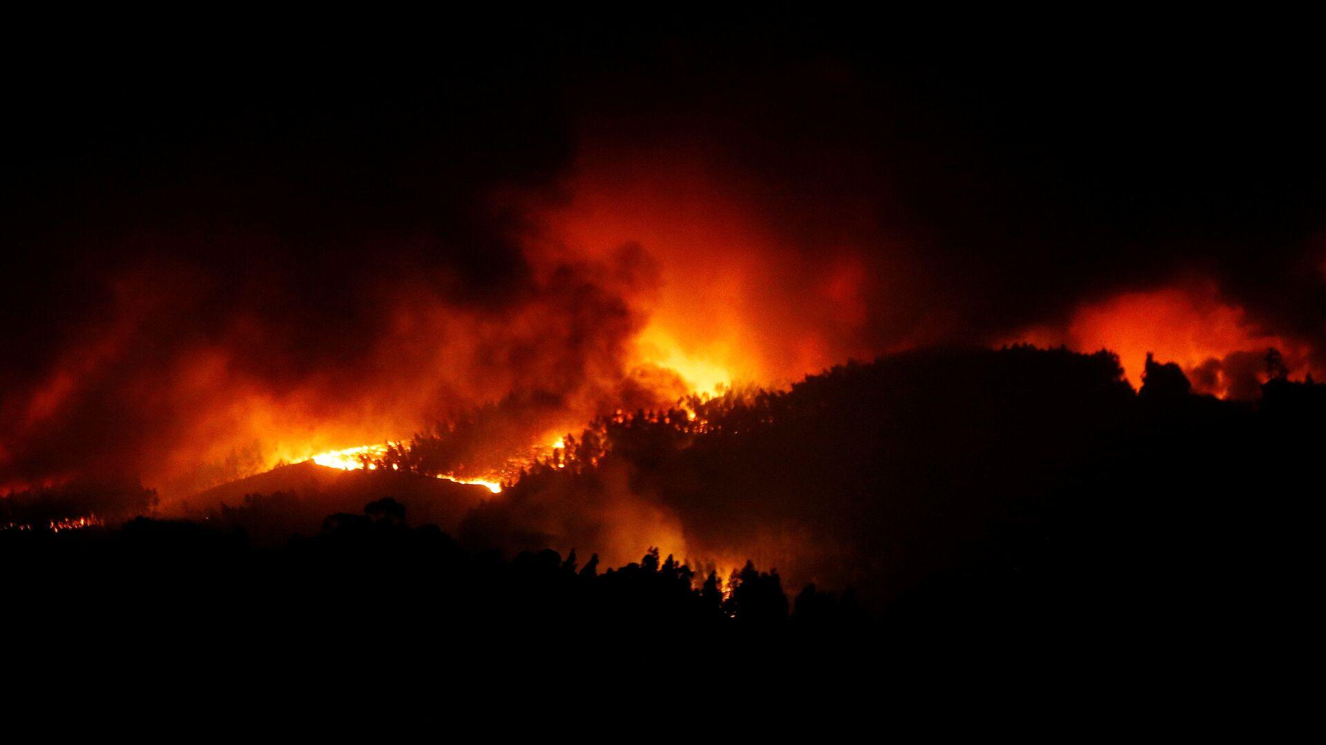 Incendio boschivo - Sputnik Italia, 1920, 05.07.2021