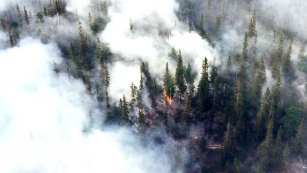 Тушение лесных пожаров - Sputnik Italia