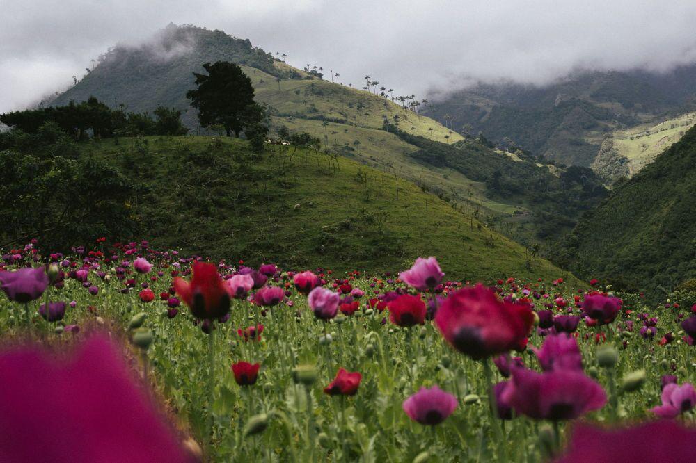 La fotografia del tedesco Jonas Wresch «The Terrible Night - Indigenous Resistance in Colombia», I° posto al Concorso Internazionale di fotogiornalismo in memoria di Anrej Stenin nella categoria Notizie Principali. Foto unica