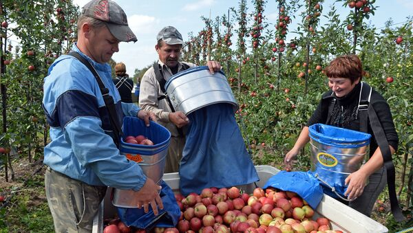 Un gruppo di lavoratori ucraini - Sputnik Italia
