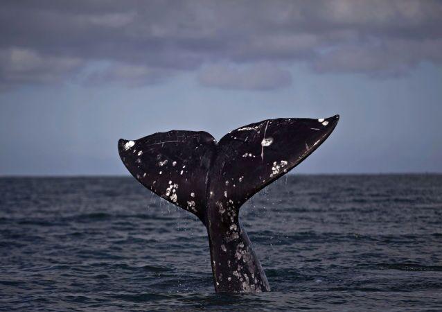 ala coda di una balena