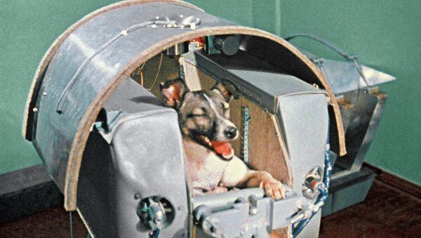 Space dog Laika - Sputnik Italia