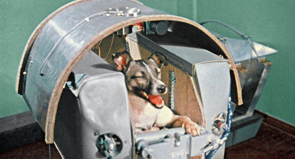 Space dog Laika