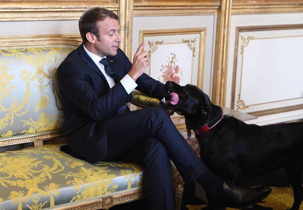 Il presidente francese Emmanuel Macron e il suo cane Nemo durante l'incontro con il vice cancelliere e il ministro degli Esteri della Germania al Palazzo dell'Eliseo. - Sputnik Italia