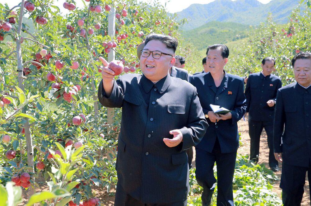 Il leader nordcoreano Kim Jong Un visita un frutteto