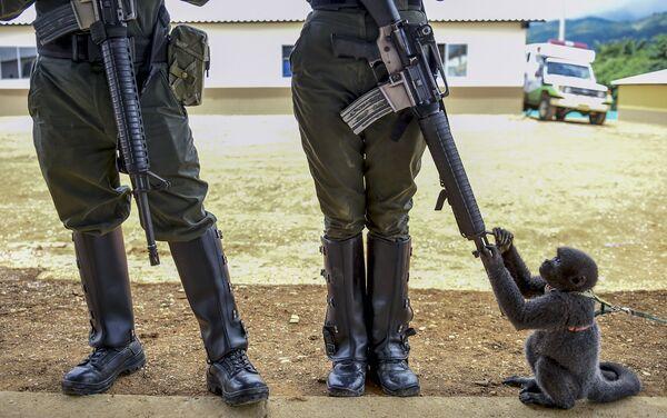 Una scimmia gioca con un fucile di un polizziotto in Columbia. - Sputnik Italia