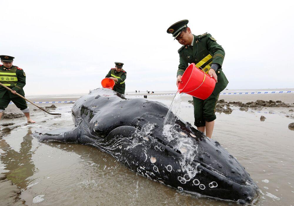 Poliziotti cinesi annaffiano una balena alla costa della città di Qidong.