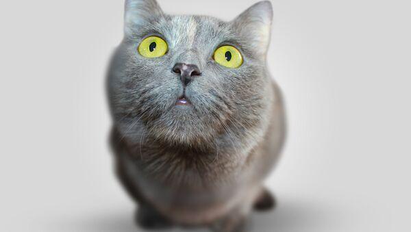 Cat - Sputnik Italia