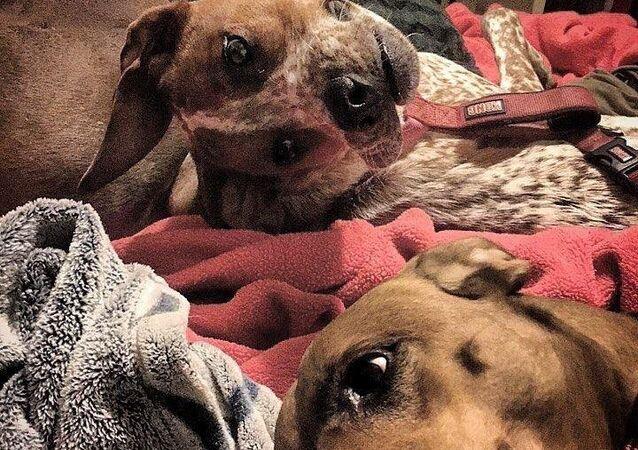 I cani di Reddit